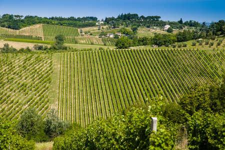 alberi da frutto: I colori vivaci dei campi agricoli coltivati ??in Italia durante la primavera: gli alberi da frutto disposti in file