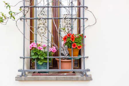 ventana con reja de hierro y macetas: rojo y fucsia geranio fotos