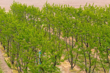 vivarium: fields of green orchards and organized into geometric rows according to the modern agriculture Stock Photo