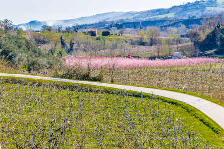 vivarium: paved country road passing between fields of orchards organized into geometric rows according to the modern agriculture Stock Photo