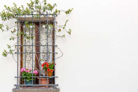 ventanas con reja de hierro y macetas: geranio rojo y fucsia fotos