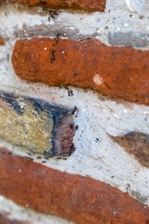 industriousness: industrious ants forming a column on a brick wall Stock Photo