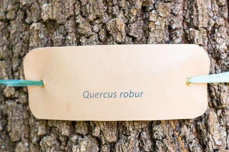 nomenclature: species  nomenclature label  on the trunk of an oak Stock Photo