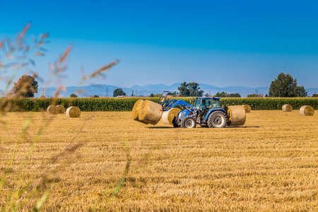 Modern agriculture - after the wheat harvest, the hay round bales are assembled by tractors with forks to be loaded on trucks