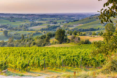 vineyard: Organic farming in hill - lush vineyards and farmland in the quiet hilly countryside Stock Photo