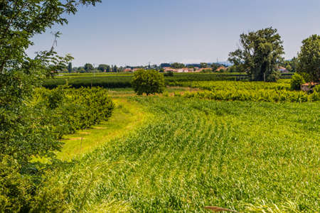 farmlands: trees and green farmlands in Emilia Romagna in in Italy Stock Photo