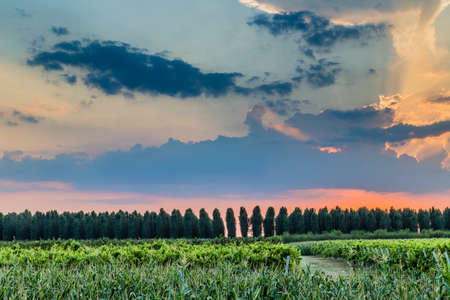 emilia: Sunset on trees and green farmlands in Emilia Romagna in in Italy Stock Photo