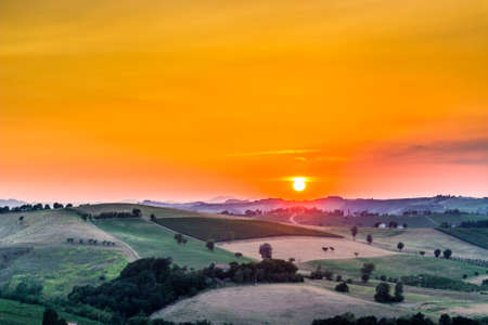 emilia romagna: Organic farming in hill – sunset on lush vineyards and farmland in the quiet hilly countryside