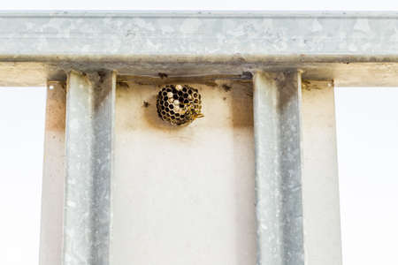 hostile: wasps, dangereous little insects - the presence of a hostile and dangerous nest on an automatic gate with steel bars