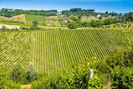 arbres fruitier: Les couleurs vibrantes de champs agricoles cultiv�es en Italie durant le printemps: les arbres fruitiers dispos�s en rang�es Banque d'images