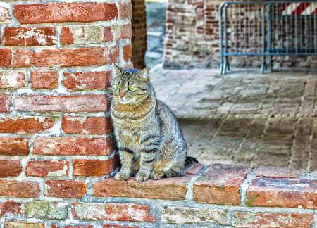tabby cat on the edge of a window in a brick wall in an old mill in Emilia Romagna 版權商用圖片