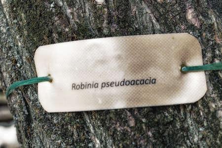 nomenclature: species  nomenclature label  on the trunk of locust-tree Stock Photo
