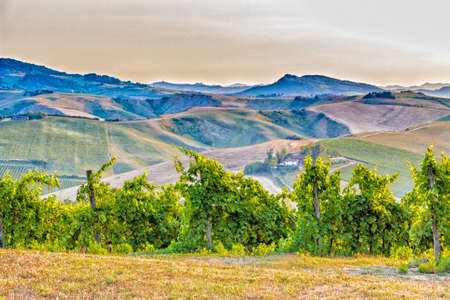 emilia romagna: Organic farming in hill - lush vineyards and farmland in the quiet hilly countryside Stock Photo