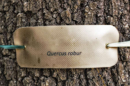 species: species  nomenclature label  on the trunk of an oak Stock Photo