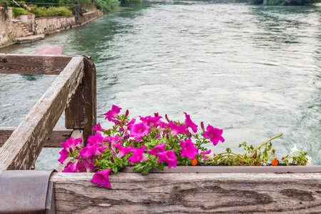 petunias: Petunias and waters of flowing river