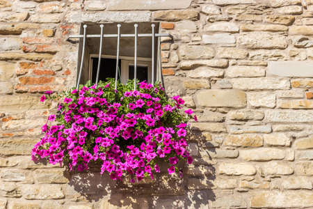 gratings: rectangular square window with white railings and pots of fuchsia hanging petunias