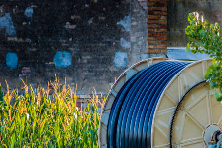 irrigate: Pipe to irrigate the fields wound on the spool near corn plants in Italian countryside