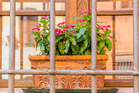 impatiens: window with vintage black railings and pots of Impatiens Sultanii Stock Photo