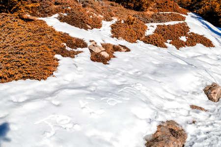 oracion: Je t'aime, frase franc�s escrito en letras may�sculas en la nieve blanca congelada mientras que las malas hierbas marrones y musgo en el primer plano