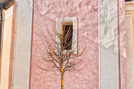 bordered: Bare branches tree in front of white bordered square window on pink ancient wall