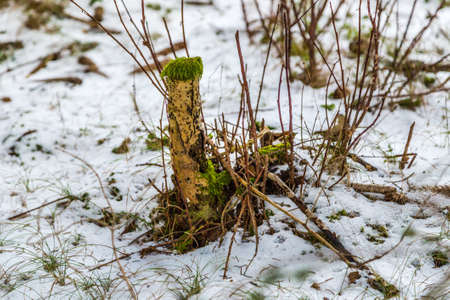 looked: plant which looked alien in a snowy mountain forest