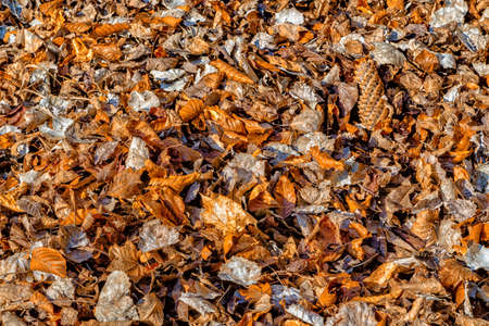carpet grass: carpet of fall leaves and blades of grass in winter Stock Photo