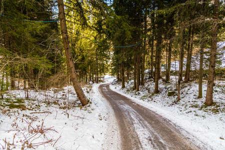 dirt path: dirt path under green conifers on the snowy Italian Alps