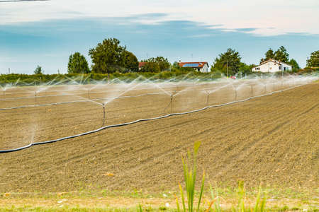 sprinkling: Irrigation of plowed and sown agricultural field with sprinklers
