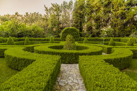 hedgerow: sunset on the hedges of an Italian garden in Italy Stock Photo