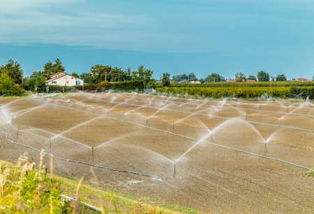 agriculture: Irrigation of plowed and sown agricultural field with sprinklers