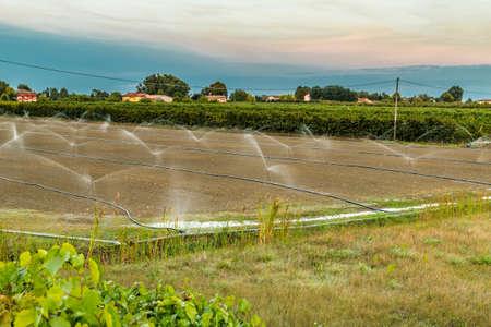 sprinklers: Irrigation of plowed and sown agricultural field with sprinklers