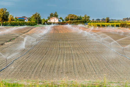 irrigation equipment: Irrigation of plowed and sown agricultural field with sprinklers