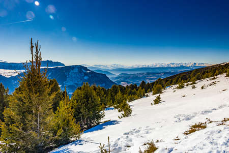altitude: Coniferous forests at high altitude on the snowy mountains