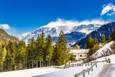conifers: Dolomite mountains covered with white snow and green conifers in Italy