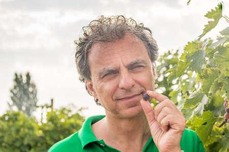 tastes: man tastes the grapes in a vineyard