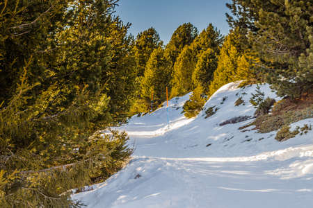 conifers: Winter Trail between conifers Stock Photo