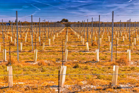 hatchery: fields of newly planted orchards and organized into geometric rows according to the modern agriculture