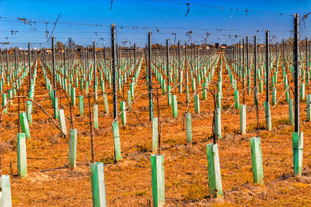 vivarium: fields of newly planted orchards and organized into geometric rows according to the modern agriculture