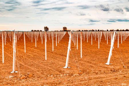 arboles frutales: hileras de postes prefabricados blancos concretos impulsados ??en el suelo para apoyar a los árboles frutales en campos arados en la agricultura moderna Foto de archivo