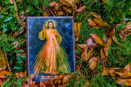 merciful: an icon with the picture of the Merciful Jesus among fallen leaves in Autumn: the translation of the Italian writing on bottom is Jesus, I trust in you