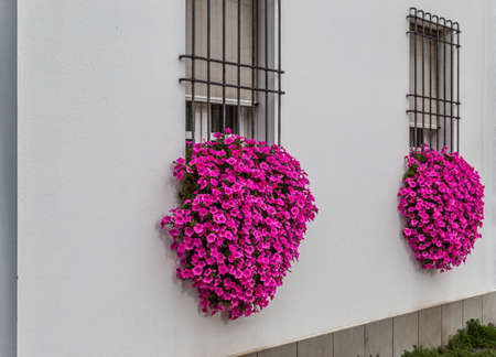 grating: cushions of fuchsia and purple petunias hanging from windows with iron grating of an italian house Stock Photo