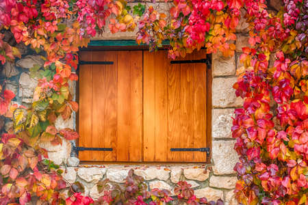 autumn colors: Virginia creeper on stone walls, red and orange leaves around window in autumn