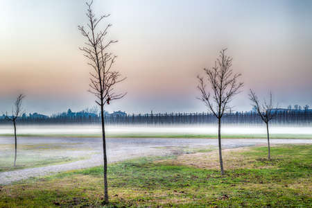 emilia: trees with bare branches in the midst of fog in the countryside of Emilia Romagna in Italy