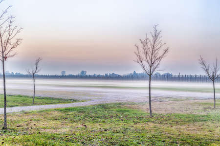 romagna: trees with bare branches in the midst of fog in the countryside of Emilia Romagna in Italy