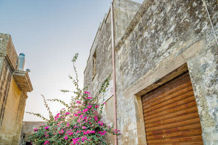 xvi: bougainvillea flowers near walls of small fortified citadel of XVI century in Italy