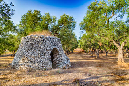 dry stone: Dry stone hut with dome in grove of olive trees in Salento in Puglia in Italy