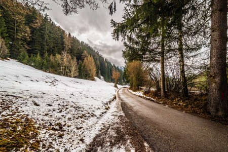 conifers: mountain road in a forest of conifers on the snowy Alps in Italy Stock Photo
