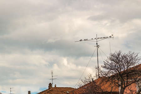tv antenna: pigeons perched on a TV antenna
