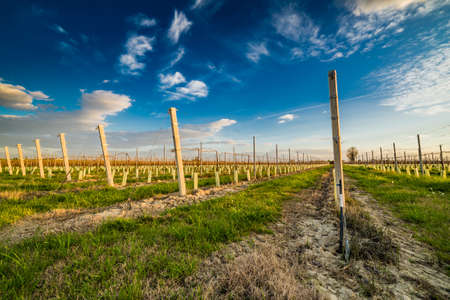 arboles frutales: El cultivo de árboles frutales en el campo de Emilia Romagna en Italia, con las plantas de semillero de plástico y cemento corsé