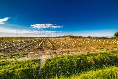 arboles frutales: hileras de árboles frutales muy pequeños con el apoyo en el campo de la Romagna en Italia
